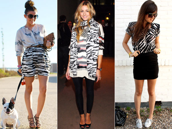 look-zebra-5